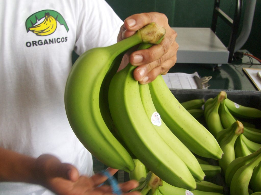 Certificados por Agricultura más de mil 600 productos orgánicos