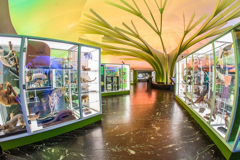 Se prepara Museo de Historia Natural y Cultura Ambiental para reapertura gradual