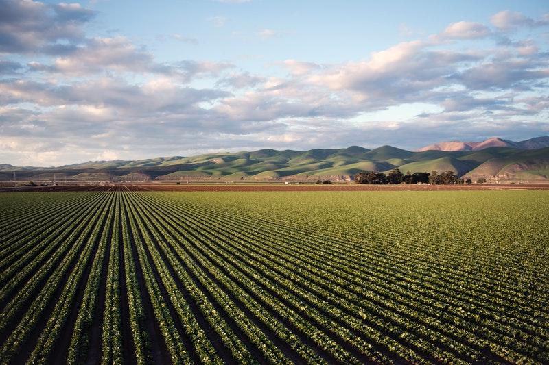 Fomentan tecnología e investigación para incrementar productividad agrícola