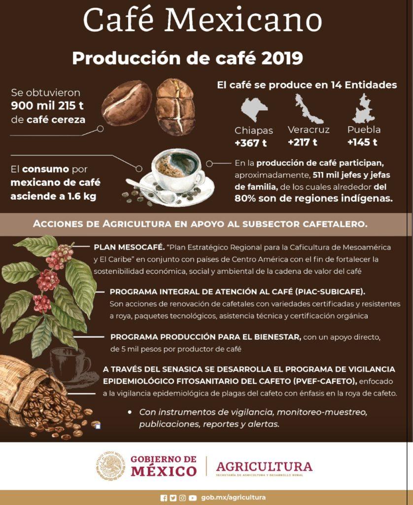 Apoya Producción para El Bienestar a más de 178 mil cafetaleros, 66.5% son indígenas