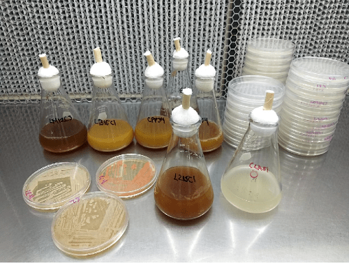 Estudia el IPN microorganismos que afectan el sistema endrócrino