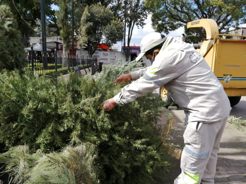 Canjea Xochimilco árboles navideños secos por composta