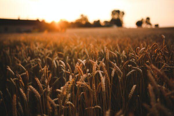Lanza Agricultura convocatoria para integrar las Redes de Recursos Genéticos para la Alimentación y la Agricultura