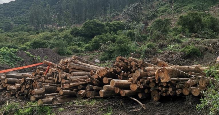 Profepa combate la tala ilegal en la reserva de la biosfera mariposa monarca