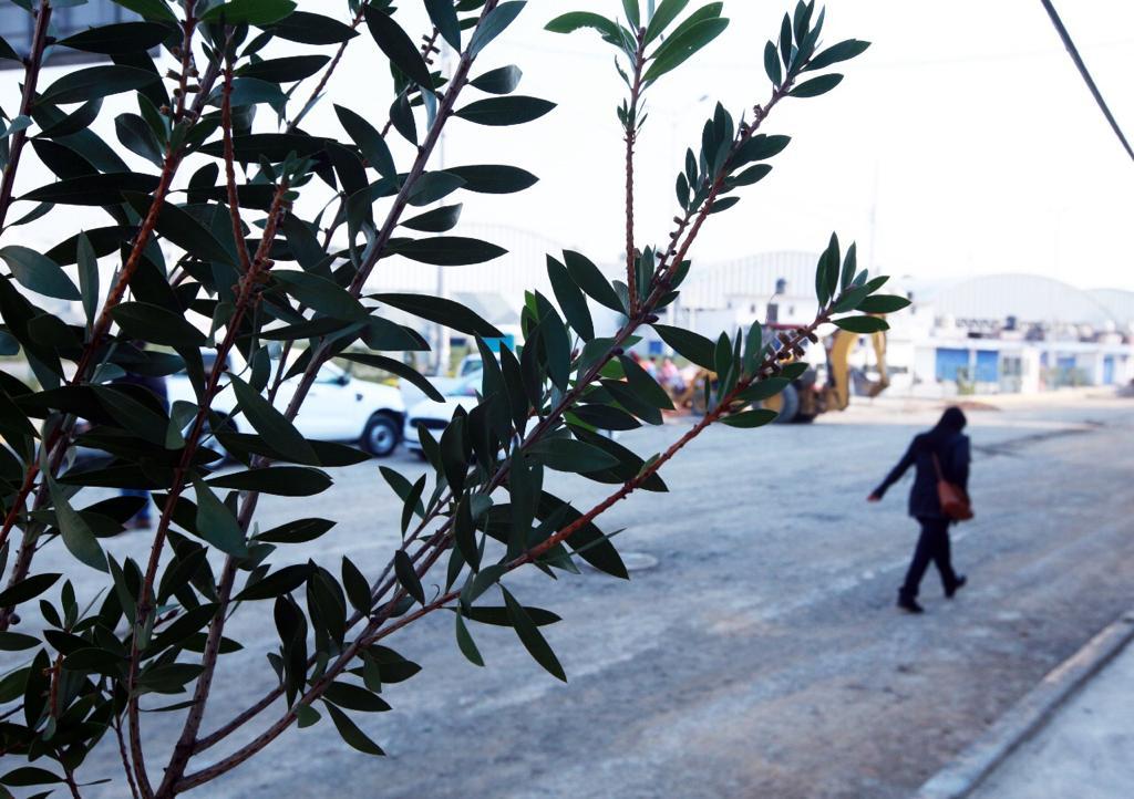 Reporta Naucalpan 50% de avance en plantación de árboles en San Bartolo