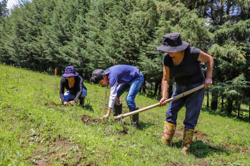 Alcaldía Tlalpan invierte 49 mdp en desarrollo agropecuario y sustentable
