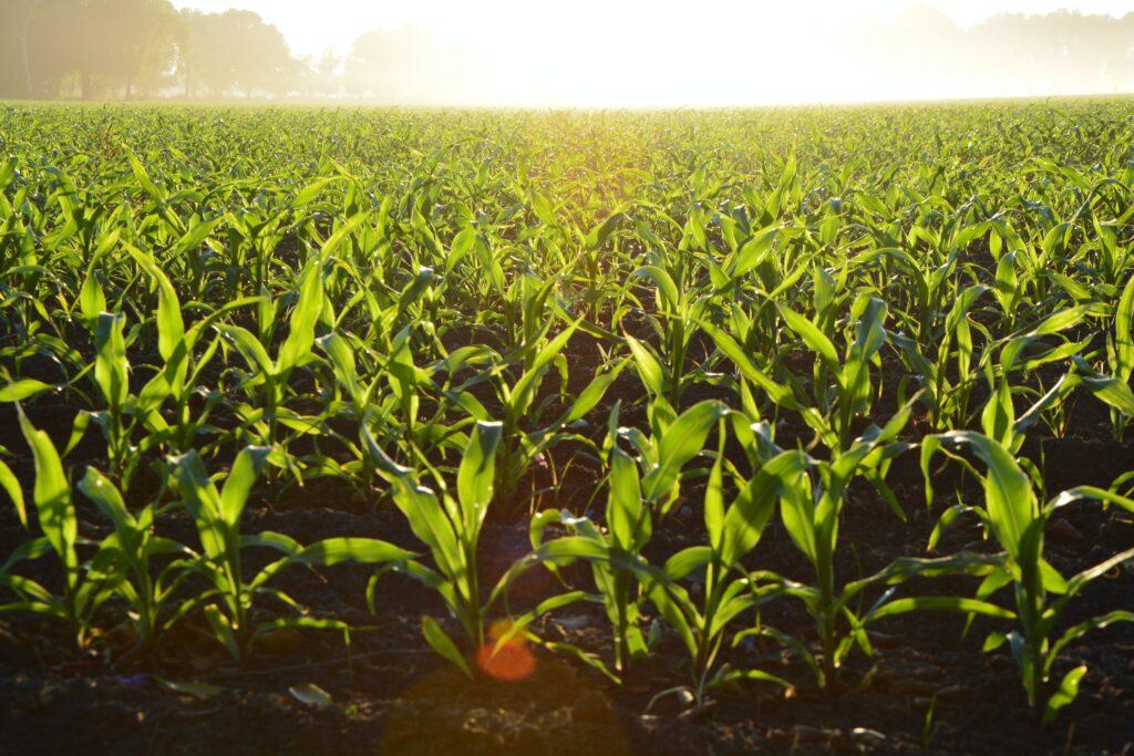 Más de 254 mil productores chiapanecos recibieron apoyos directos de Producción para el Bienestar en los primeros 40 días del año
