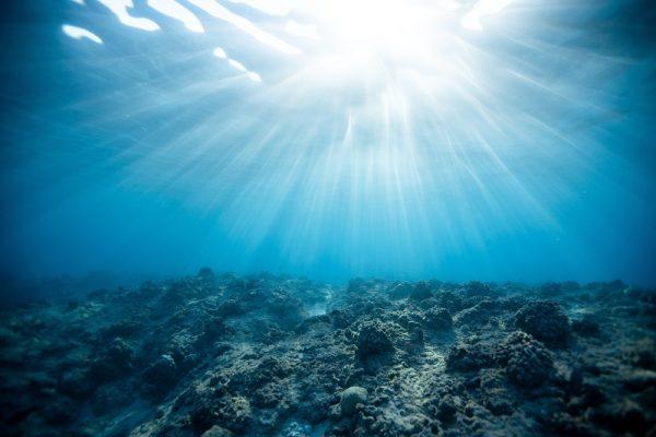 Crean recetario de cocina para salvar a los océanos y proteger la vida marina