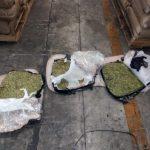 Aduanas, marina armada de México y FGR decomisan más de una tonelada de marihuana en el Puerto de Manzanillo