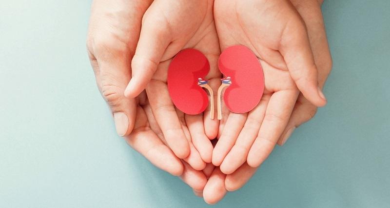En beneficio de 11 derechohabientes, IMSS coordina procuración de órganos y tejidos en su Red Hospitalaria de Donación y Trasplantes