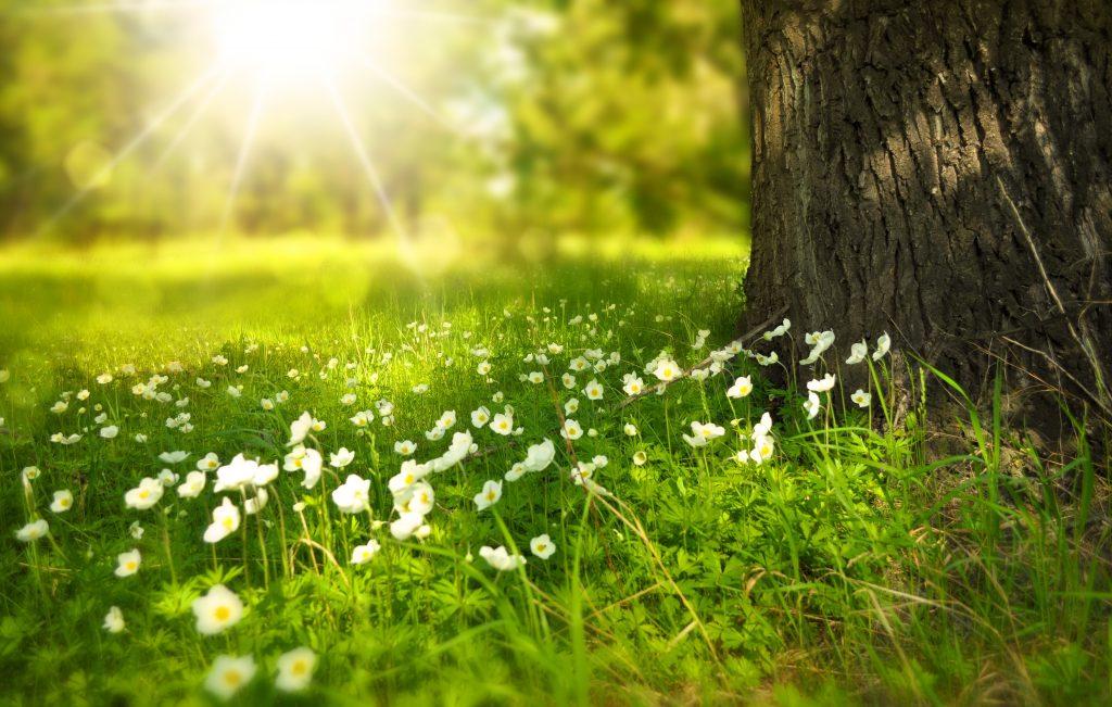 Se prevé viernes caluroso con una máxima de 30°C; se recomienda evitar actividades al aire libre por altos índices de radiación UV