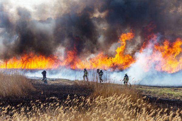 Situación de incendios forestales en México al 06 de mayo
