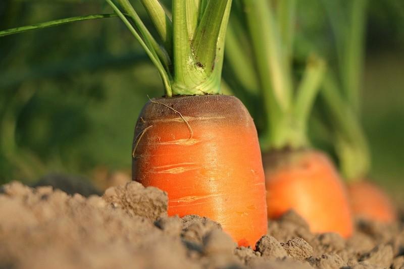Agricultura 5.0, el futuro del campo