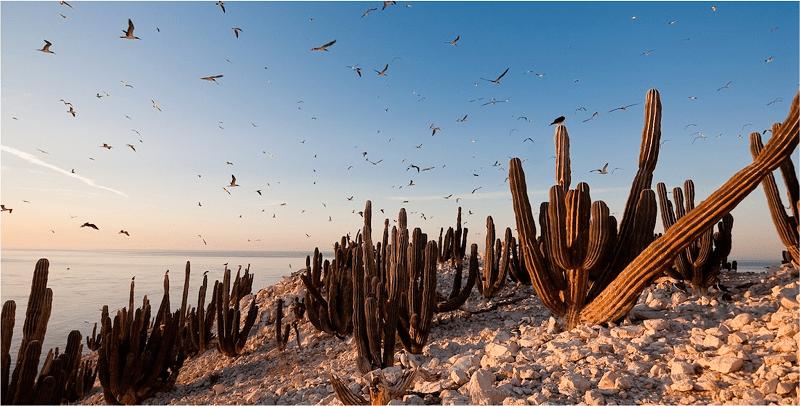 Monitorea IPN presencia de Contaminantes Orgánicos Persistentes en el Golfo de California