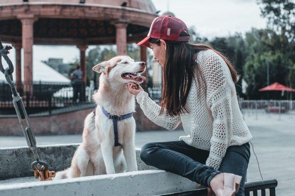 Tlalnepantla entrega en adopción 70 animales de compañía