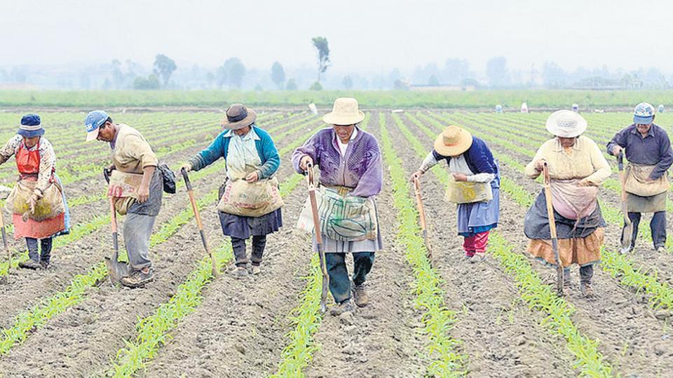 AMLO mantiene aprobación durante 3 meses; campesinos, los que más lo respaldan